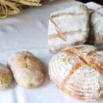 パンNAVI〜食後に小麦茶「麦の雫」を〜特別ver 新麦